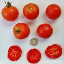 Swiss Alpine - Organic Heirloom Tomato Seeds - Delicious Slicer - 40 Seeds
