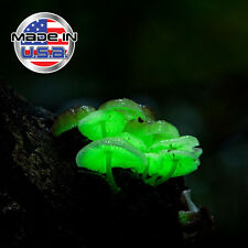 Glow in the Dark Mushroom Kit- Grow Panellus Stipticus Bioluminescent Mushrooms