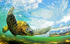 HAWAIIAN TURTLE IN THE WAVES -  CROSS STITCH CHART