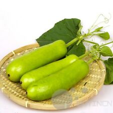 Vegetable - 10 Seeds Short Bottle Gourd Seed Lagenaria Siceraria