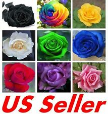 25 PCS Mixed Colors Rose SEEDS G44, Stunning Colors PERENNIAL FLOWER SEED