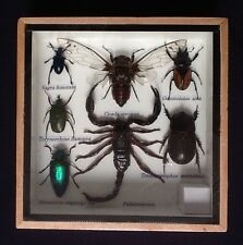REAL EXOTIC 7 INSECT DISPLAY TAXIDERMY ENTOMOLOGY JEWEL SCORPION BEETLE INSECTS