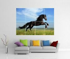 STALLION BLACK BEAUTY HORSE GIANT WALL PHOTO PICTURE PRINT ART POSTER J167