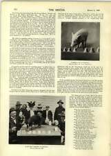 1899 Barnum Bailey's Performing Pigs Miss Maud Sinclair Hind