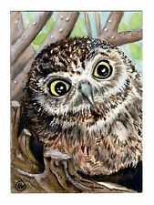 """ACEO ORIGINAL """"O, Huge World"""" baby owl in nest painting by Colette van der Wal"""