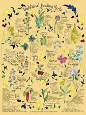 "Traditional Healing Herbs/Watercolor Printed Poster/18"" x 24""/Margo Davis,Artst"