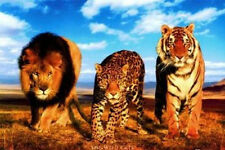 WILD CATS POSTER 24x36 - NATURE LION JAGUAR TIGER 5521