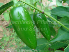 JALAPENO ORANGE Chili 10 Samen Peperoni Paprika Zimmer Balkon würzig medium hot
