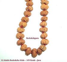Rare 12 Mukhi Rudraksha Mala / Surya Radiance Mala - Lab Certified - 109 beads