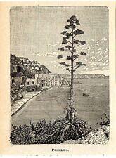 Stampa antica NAPOLI Veduta panoramica di Posillipo 1905 Old antique print