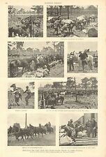 Tampa FL. Black History, 9th US Cavalry, Colored Troops, 1898 Antique Print