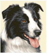 BORDER COLLIE dog - complete counted cross stitch kit