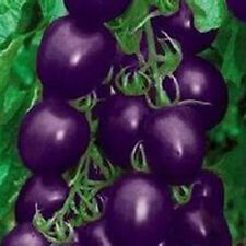 30pcs Hot Sale Purple Cherry Tomato Organic Heirloom Fruit Vegetable Plant Seeds
