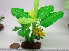 Banana Tree ( m)  Doll House Miniatures Flowers, Garden