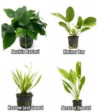 4 Potted Live Aquarium Plants Bundle - Anubias, Amazon Sword, Kleiner Bar, etc