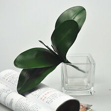 Artificial Green Rose Leaves/Butterfly Orchid  Silk Leaf Beauty Plant Decor