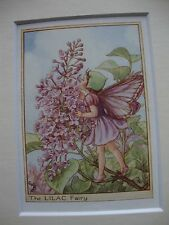 Cecily Mary Barker THE LILAC FAIRY Mounted Vintage Print 1940s