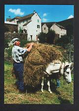 LA ROUVIERE prés d'ALTIER (48) FENAISON , AGRICULTEUR & JUMENT en 1999