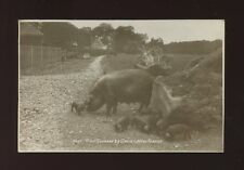 Animals PIGS Piglets New Forest Hants Used 1929 RP PPC Sunshine Series Sweetman
