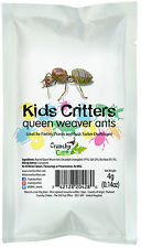 Edible Insects Bugs Bush Tucker Kids Critters Queen Weaver Ants Crunchy Critters