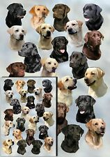 Labrador Retriever Dog Gift Wrapping Paper By Starprint - Auto combined postage