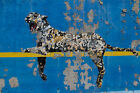 banksy leopard graffiti wall urban street art PRINT CANVAS a1 size