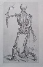 Vesalius DIE 13. FIGUR DER MENSCHLEIN Nachdruck Kupfertafel Anatomie print
