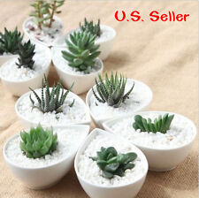TearDrop White Ceramic Pot Planter plant succulent flower With Hole Gardening