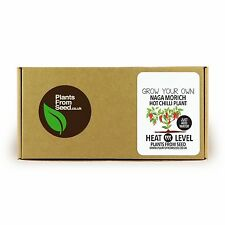 Grow Your Own Naga Morich Chilli Mini Plant Kit