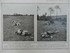 1914 CASUALTIES DEAD AT SOIZY-AUX-BOIS AT FERE CHAMPENOISE WWI WW1