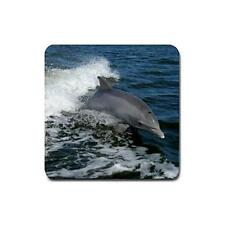 Bottlenose Dolphin  drink coasters 4 pack