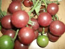 Tomato Black Cherry x 100 Tomato Seeds