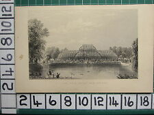 1851 ANTIQUE LONDON PRINT ~ THE PALM HOUSE KEW GARDENS