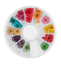 Fashion 36pcs 12 Color Dried Dry Flower Nail Art Wheel Decoration Manicure Tips