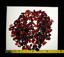 DINO: Tiny Gemmy Red GARNET Polished Stones - 33 gr. - Brazil