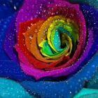 35 Rose Rosen Samen farbigen Blütenblätter Seeds + Tribute - Geschenk