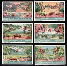 Water Insects Cards Set Liebig 1937 Beetles Pond Life Dragonfly Libellule Damsel