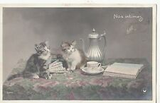 B81384 sitting on table nos intimes cat chat front/back image