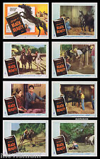 COURAGE OF BLACK BEAUTY Vintage Lobby Card set Johnny Crawford