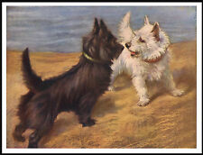 SCOTTISH AND WESTIE TERRIER DOGS LOVELY IMAGE DOG PRINT POSTER