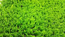 4m x 1m Artificial Fake Green Grass Lawn Astro Turf Greengrocers 17mm Thick 4sqm