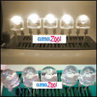 20PC 8mm 0.5W HP Warm White StrawHat LED 140° 90.000mcd