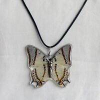 Real Insect Butterfly Necklace Pendant. Polyura eudamippus Great Nawab Leafwing