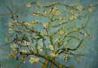 Van Gogh Almonds Classic Oil Painting 30x20 not poster.