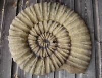AMMONITE FOSSIL STONE STEPPING STONE WALL PLAQUE frostproof garden ornament