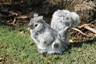 Grey Squirrel Real Size Realistic Taxidermy Figurine Stuffed Furry Animal