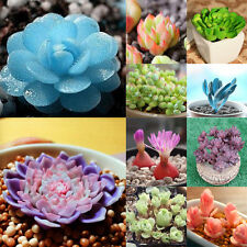 60 Seeds Mixed Home Office Decorative Succulents Seeds Potted Flower Seeds