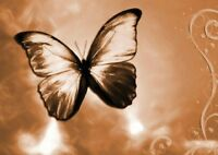 BUTTERFLY WALLPAPER A3 PICTURE ART POSTER PRINT GZ053