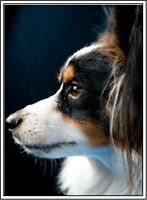 Pack of 4 Papillon Puppy Dog Stationery Greeting Notecards / Envelopes