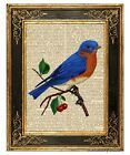 Eastern bluebird Art Print on Antique Book Page Vintage Illustration Garden Bird